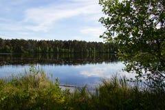 Paisaje hermoso, lago del bosque Fotografía de archivo
