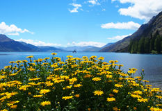 Paisaje hermoso Nueva Zelandia Foto de archivo libre de regalías