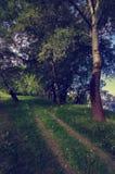 Paisaje hermoso que muestra el camino a través de bosque en primavera Imágenes de archivo libres de regalías