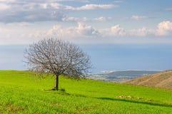 Paisaje hermoso y árbol solitario Fotos de archivo libres de regalías