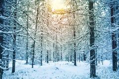 Paisaje hermoso y dramático del paisaje de la puesta del sol del invierno con el árbol Foto de archivo