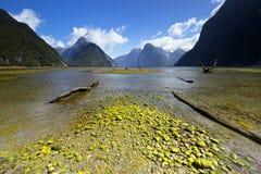 Paisaje hermoso y vivo de Milford Sound Imagen de archivo libre de regalías