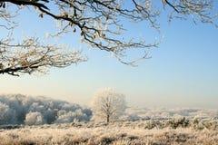 Paisaje hivernal asoleado Foto de archivo libre de regalías