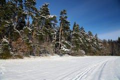 Paisaje hivernal con los árboles nevosos Imagen de archivo libre de regalías