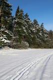 Paisaje hivernal con los árboles nevosos Fotos de archivo