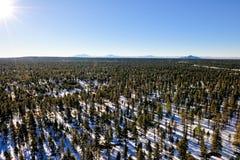 Paisaje hivernal del bosque Fotos de archivo libres de regalías