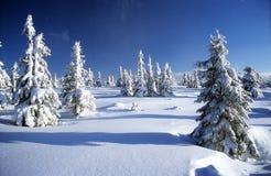 Paisaje hivernal del paisaje Foto de archivo libre de regalías