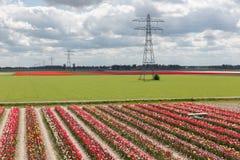 Paisaje holandés con el jardín de la demostración del tulipán y el pilón de la electricidad fotos de archivo libres de regalías