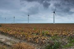 Paisaje holandés con las turbinas de viento Fotografía de archivo