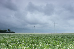 Paisaje holandés con las turbinas de viento Fotos de archivo libres de regalías