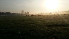 Paisaje holandés de la salida del sol Imagen de archivo