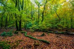 Paisaje holandés del bosque del otoño con las hojas caidas Foto de archivo libre de regalías