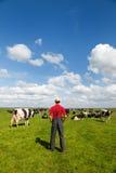 Paisaje holandés típico con el granjero y las vacas Imagenes de archivo