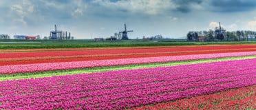 Paisaje holandés Fotos de archivo libres de regalías
