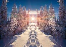 Paisaje horizontalmente movido de un tirón del invierno en las montañas Foto de archivo