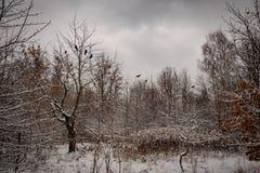 Paisaje idílico del invierno del invierno con los árboles y con nieve fresca imagenes de archivo