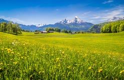 Paisaje idílico en las montañas con los prados y las flores verdes Imagen de archivo libre de regalías