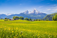 Paisaje idílico en las montañas con los prados y las flores verdes Fotografía de archivo libre de regalías