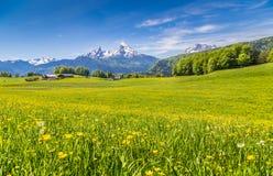 Paisaje idílico en las montañas con los prados y las flores verdes Foto de archivo libre de regalías