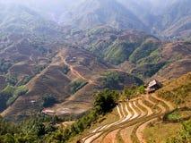 Paisaje imponente de la terraza del arroz fotografía de archivo libre de regalías