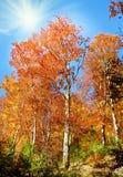 Paisaje increíble con los árboles amarillos en la luz del sol en el au Fotos de archivo libres de regalías