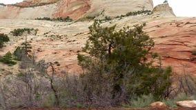 Paisaje increíblemente hermoso en Zion National Park, Washington County, Utah los E.E.U.U. Movimiento liso de la cámara a lo larg almacen de video
