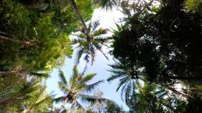 Paisaje Indonesia de la selva tropical almacen de metraje de vídeo