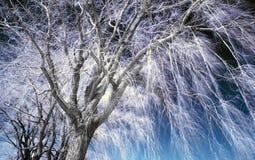 Paisaje infrarrojo Imagen de archivo libre de regalías