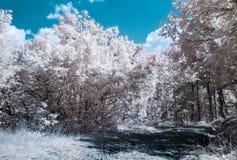 Paisaje infrarrojo de la fotografía (IR) Imagen de archivo libre de regalías