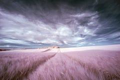 Paisaje infrarrojo del verano del color falso surrealista imponente sobre agri foto de archivo libre de regalías