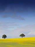 Paisaje inglés rural Imagen de archivo libre de regalías