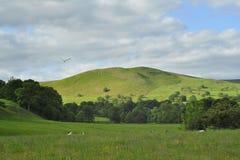 Paisaje inglés del campo: colinas, rastro, pájaro Foto de archivo libre de regalías