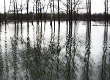 Paisaje inundado blanco y negro Foto de archivo