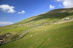 Paisaje irlandés de campos, Irlanda Imagen de archivo libre de regalías