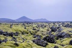 Paisaje islandés del musgo Imagen de archivo