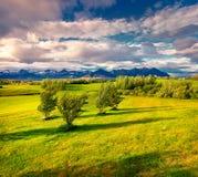 Paisaje islandés típico con el campo de la hierba verde en el junio Imagenes de archivo