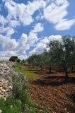 Paisaje italiano meridional del campo Región de Basilicata Foto de archivo libre de regalías