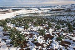 Paisaje joven de las montañas de la nieve de la cosecha de árbol Foto de archivo libre de regalías