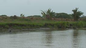 Paisaje llano de la orilla del río, Wisirare, Colombia almacen de video