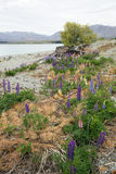 Paisaje llenado de las flores salvajes Fotos de archivo