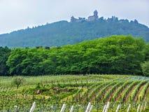 Paisaje a lo largo de los pueblos de los vins del DES de la ruta, otoño, Alsacia Haut-Rhin, Francia Alsacia del viñedo del koenig imagen de archivo