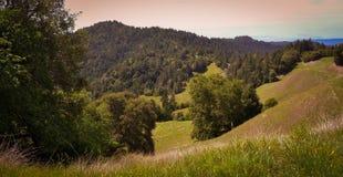 Paisaje a lo largo del camino de Fort Bragg Willits en California Imagenes de archivo