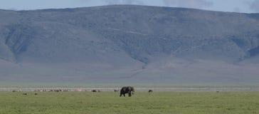 Paisaje lurar elefante 1 Royaltyfria Foton
