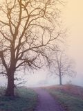 Paisaje místico con el árbol, el camino y la niebla fotografía de archivo libre de regalías
