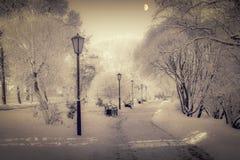 Paisaje místico del invierno - árboles congelados imagen de archivo