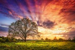 Paisaje majestuoso de la salida del sol colorida brillante sobre prado rural con el árbol grande por la mañana de la primavera Imágenes de archivo libres de regalías