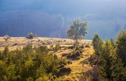 Paisaje majestuoso de las montañas con las hojas verdes frescas Imagen de archivo libre de regalías