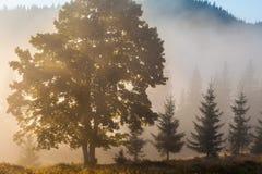 Paisaje majestuoso de las montañas con las hojas verdes frescas Imágenes de archivo libres de regalías