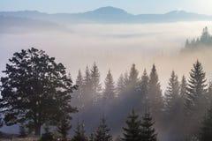 Paisaje majestuoso de las montañas con las hojas verdes frescas Fotografía de archivo libre de regalías