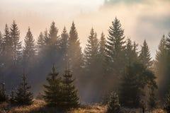 Paisaje majestuoso de las montañas con las hojas verdes frescas Fotos de archivo libres de regalías